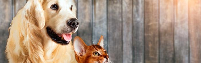 Начинаются проектно-изыскательские работы для строительства нового приюта для безнадзорных животных в районе Бирюлёво Западное на юге столицы, сообщил р...